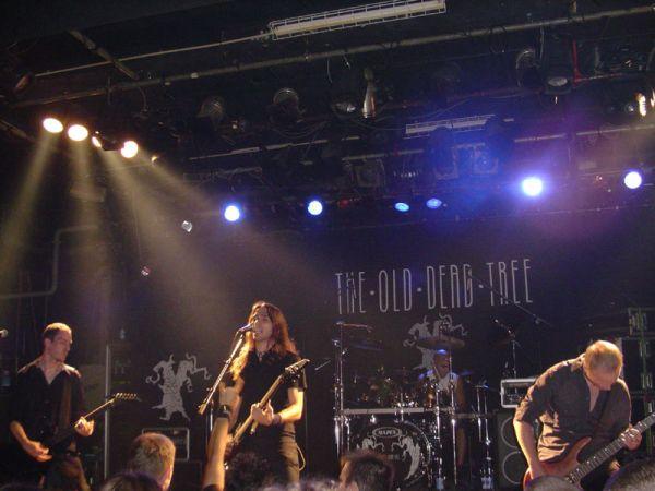 The old dead tree - Genève, 23/09/2006