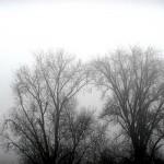 Split Arbre & Brouillard - Brouillarbre